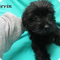 Adopt A Pet :: Devin - Bartonsville, PA