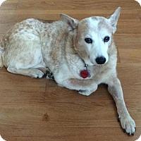 Adopt A Pet :: Marleaux - Lafayette, LA