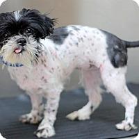 Adopt A Pet :: Dot Dot - Concord, NC