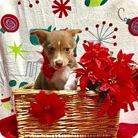 Adopt A Pet :: Branch - Joliet, IL