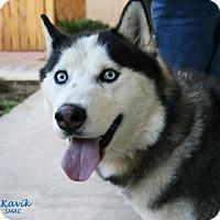 Adopt A Pet :: Kavik - Santa Maria, CA