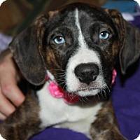 Adopt A Pet :: D15 Litter-Benson - Livonia, MI