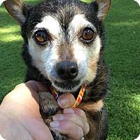 Adopt A Pet :: Jacqueline Onassis - Los Angeles, CA