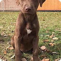 Adopt A Pet :: Gemme - Jesup, GA