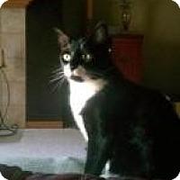 Adopt A Pet :: Patton - Milwaukee, WI