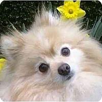 Adopt A Pet :: Kane - Gum Spring, VA