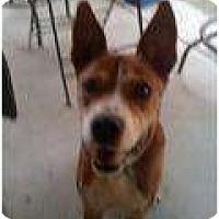 Adopt A Pet :: Bryson - pasadena, CA