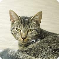 Adopt A Pet :: Peanut - Medina, OH