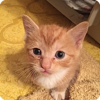 Adopt A Pet :: Junipurr - Cranford/Rartian, NJ