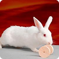 Adopt A Pet :: Bess - Marietta, GA