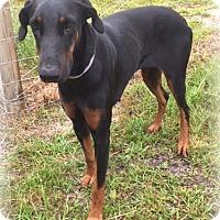 Adopt A Pet :: Alec - Charlemont, MA