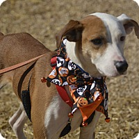 Adopt A Pet :: Bristol - Marietta, GA