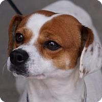 Adopt A Pet :: Elway - Toccoa, GA
