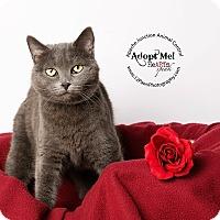 Adopt A Pet :: Nattie - Apache Junction, AZ