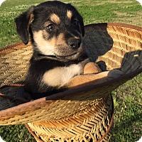 Adopt A Pet :: James Franco - New Orleans, LA