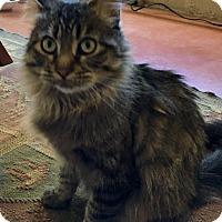 Adopt A Pet :: Sofia - Tucson, AZ
