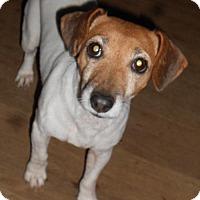 Adopt A Pet :: Belle - Mechanicsburg, PA
