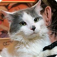 Adopt A Pet :: Brutus - Albany, NY