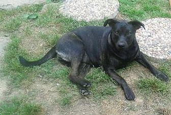 Terrier (Unknown Type, Medium) Mix Puppy for adoption in Staunton, Virginia - Nicole