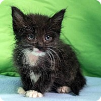 Adopt A Pet :: Khloe - Austin, TX