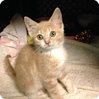 Adopt A Pet :: Cadbury - East Brunswick, NJ