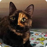 Adopt A Pet :: MINERVA - Anchorage, AK
