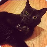 Adopt A Pet :: Munro - Toronto, ON