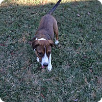 Adopt A Pet :: Hank - Hohenwald, TN