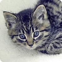 Adopt A Pet :: Tator Tot - Davis, CA