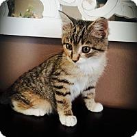 Adopt A Pet :: Roper - Princeton, MN