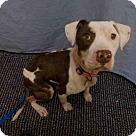 Adopt A Pet :: *STAR