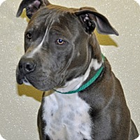 Adopt A Pet :: Goomba - Port Washington, NY