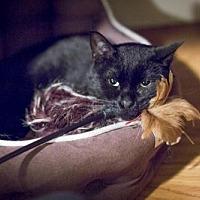 Adopt A Pet :: Billy - Oakland, CA