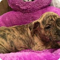 Adopt A Pet :: Judy - Barnhart, MO