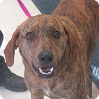 Adopt A Pet :: Petey - Claremore, OK