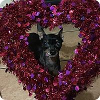 Adopt A Pet :: Macho - Davie, FL