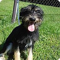 Adopt A Pet :: LULU - ROCKMART, GA