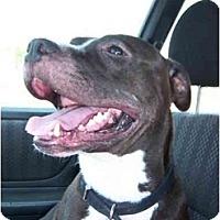 Adopt A Pet :: Buster - Dallas, PA