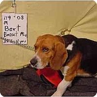Adopt A Pet :: Bert/Pending - Zanesville, OH