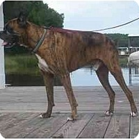 Adopt A Pet :: Atticus - Albany, GA