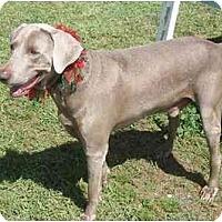 Adopt A Pet :: Ralph  **ADOPTED** - Eustis, FL