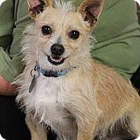 Adopt A Pet :: Dobbie - Knoxville, TN