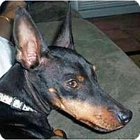 Adopt A Pet :: Peanut - Summerville, SC