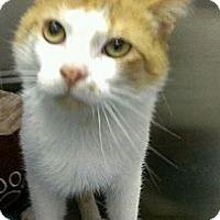 Adopt A Pet :: Danny Bonaduce - Richboro, PA