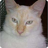 Adopt A Pet :: Fabio - Morgan Hill, CA