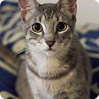 Adopt A Pet :: Mili - Carencro, LA
