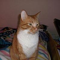 Adopt A Pet :: Regent - Mississauga, Ontario, ON