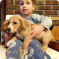 Adopt A Pet :: Soldier - Aurora, CO