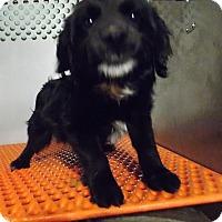 Adopt A Pet :: Buddy - Lewisburg, TN