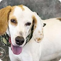 Adopt A Pet :: Sirius - Bradenton, FL